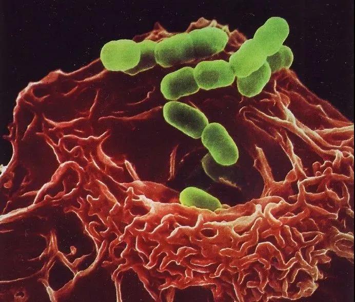 免疫细胞储存