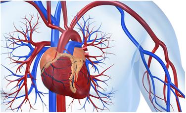 血管功能评估